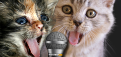 Two cats singing into microphone
