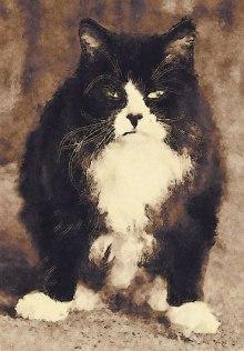 Zenemy Mad Cat